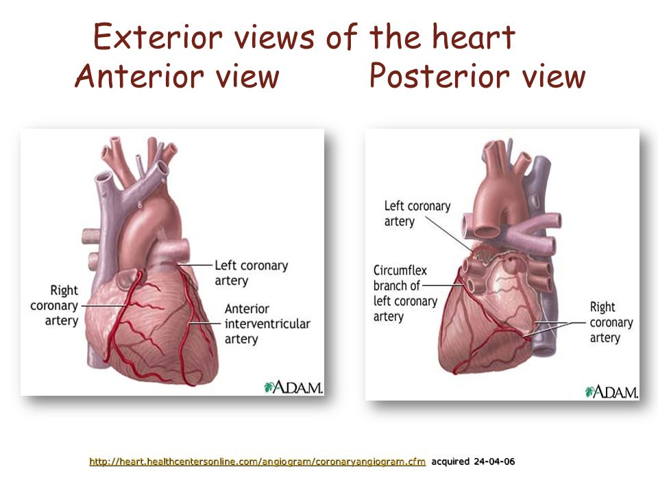 angina pectoris and acute coronary syndrome acs ppt video online download