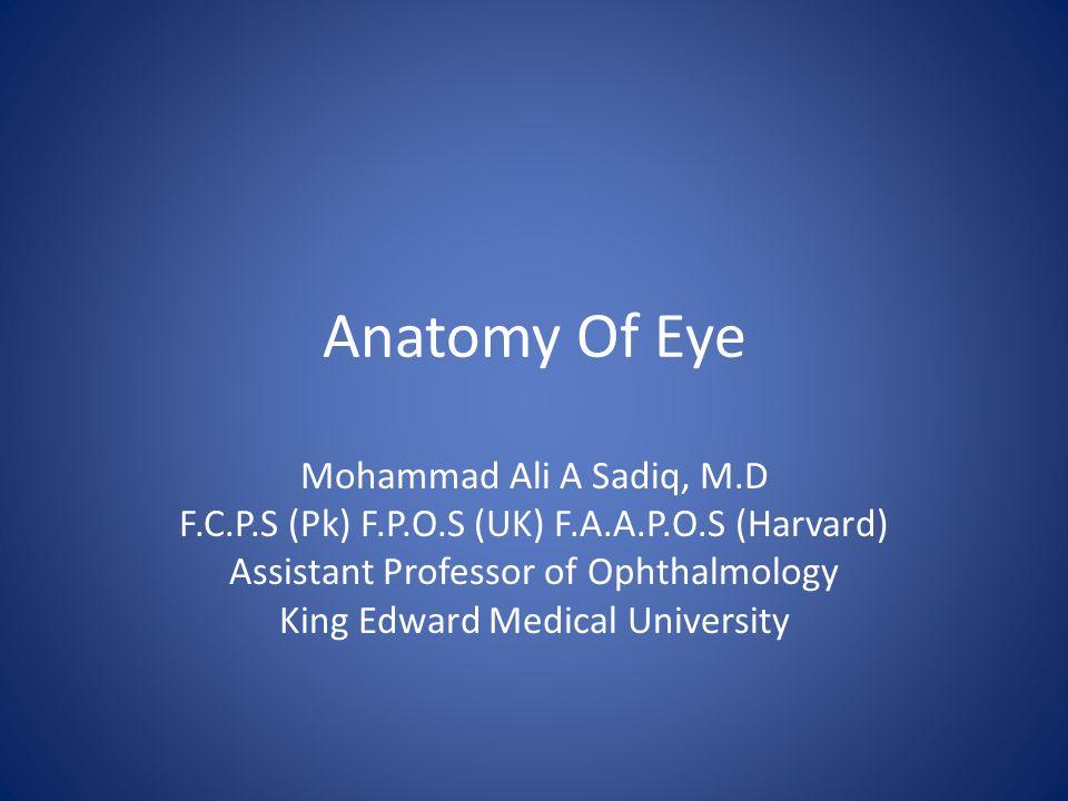 Anatomy Of Eye Mohammad Ali A Sadiq, M.D - ppt video online download