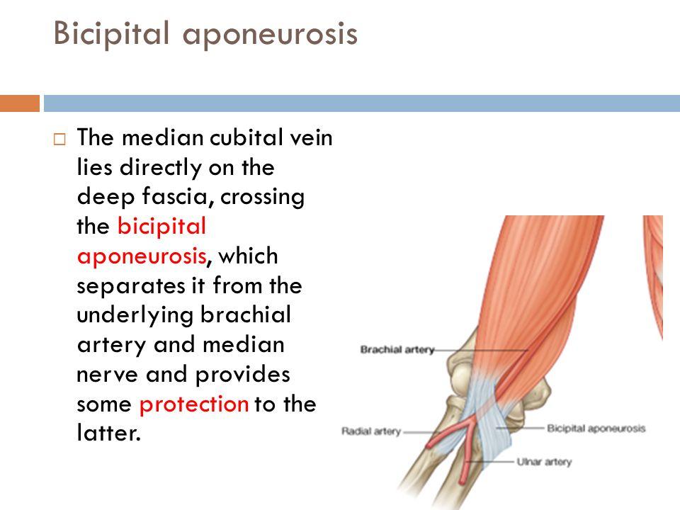 Bicipital Aponeurosis Pain Image Mag