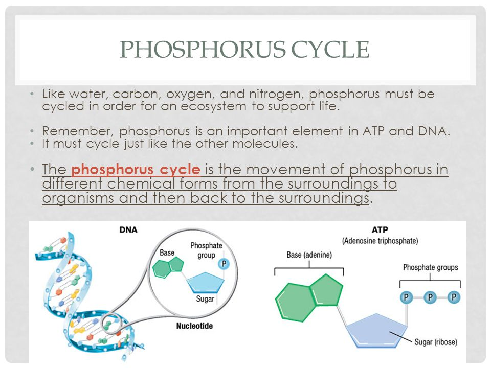 carbon phosphorus and nitrogen cycles essay How humans impact the carbon, phosphorus, and nitrogen cycles christine richardson environmental science may 1, 2013 the carbon cycle is based on carbon dioxide which is a very important element because it is a part of all life.