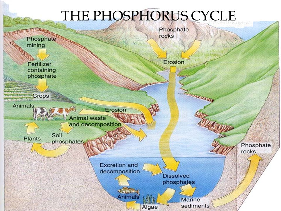 Objectives Summarize the steps of the water cycle in a diagram ...