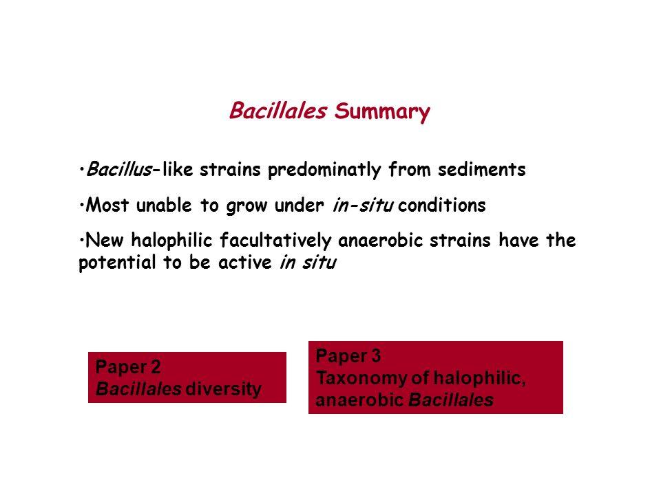 Bacillales Summary Bacillus-like strains predominatly from sediments