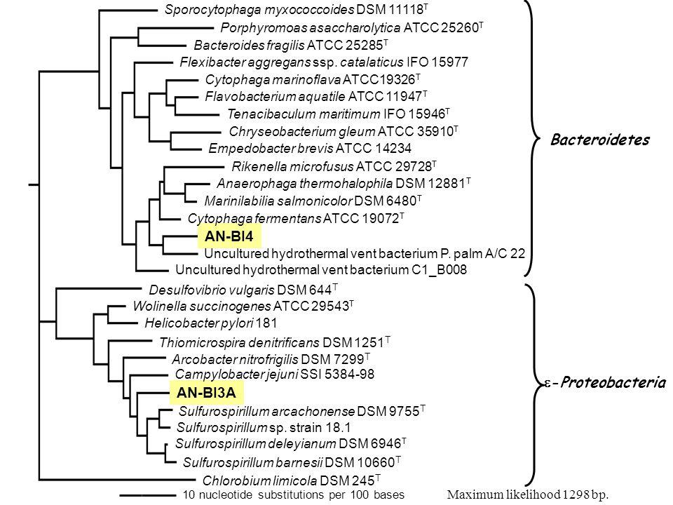 Bacteroidetes AN-BI4 e-Proteobacteria AN-BI3A
