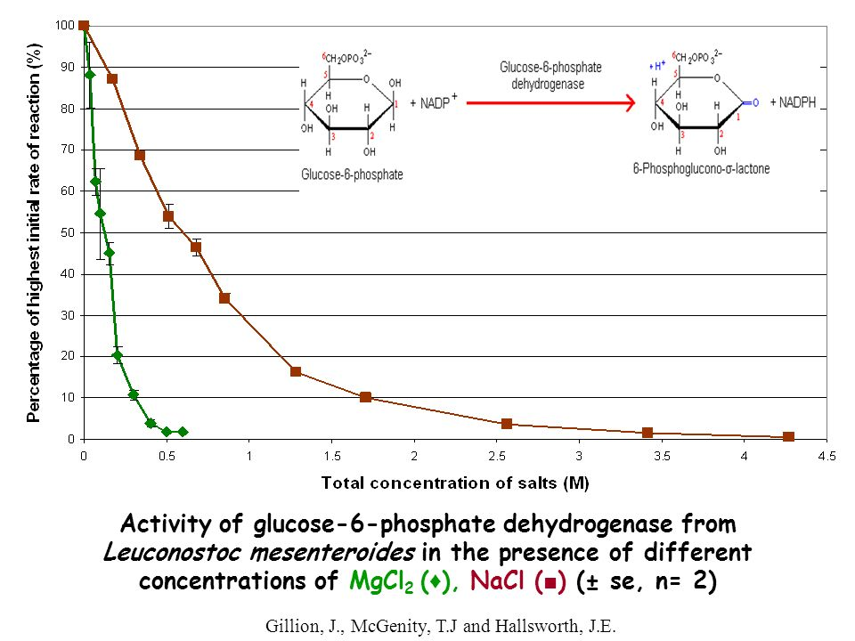 Activity of glucose-6-phosphate dehydrogenase from Leuconostoc mesenteroides in the presence of different concentrations of MgCl2 (♦), NaCl (■) (± se, n= 2)