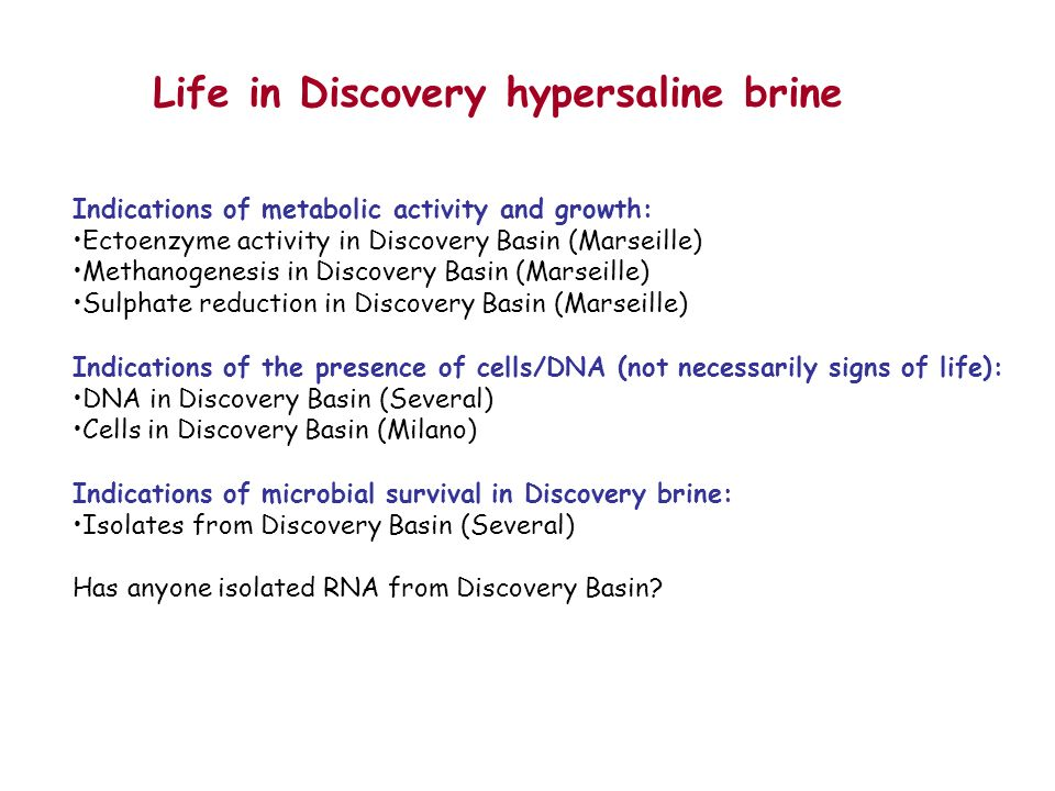 Life in Discovery hypersaline brine