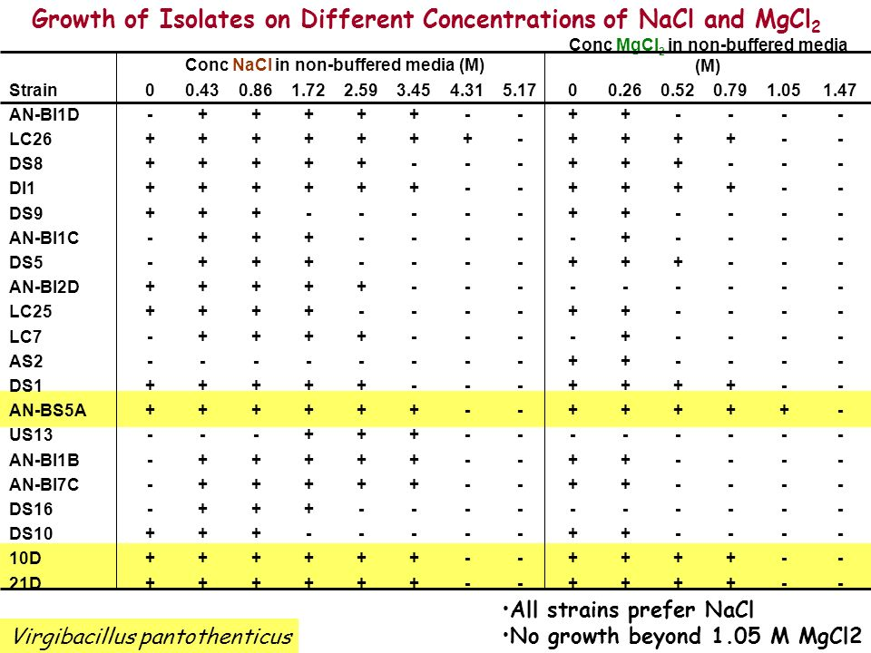 Growth of Isolates on Different Concentrations of NaCl and MgCl2