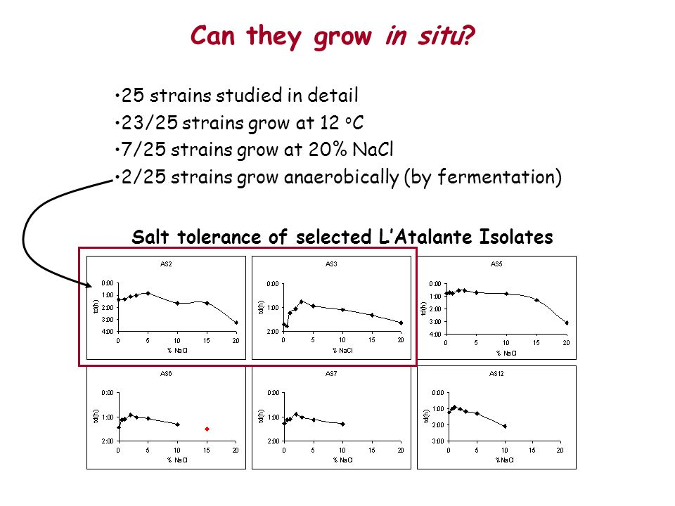 Can they grow in situ 25 strains studied in detail