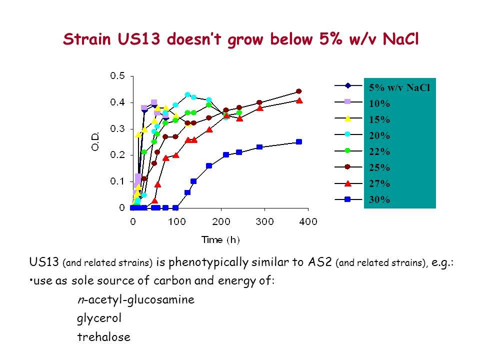 Strain US13 doesn't grow below 5% w/v NaCl