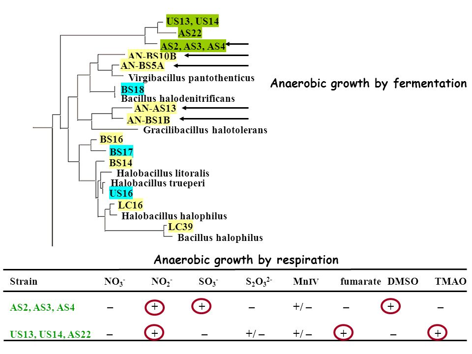 Anaerobic growth by fermentation