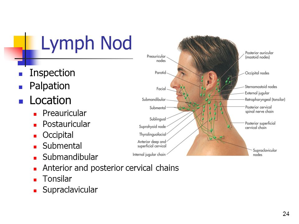 Head, Neck, and Regional Lymphatics - ppt video online ...