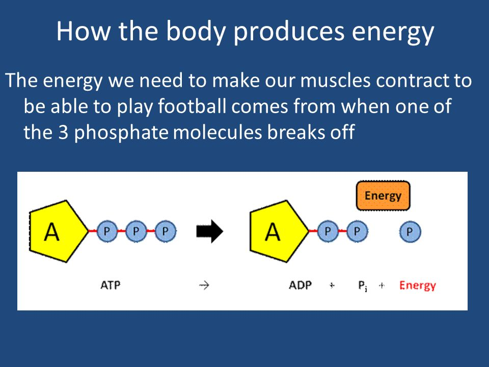 Unit 1 – Anatomy & Physiology - ppt video online download
