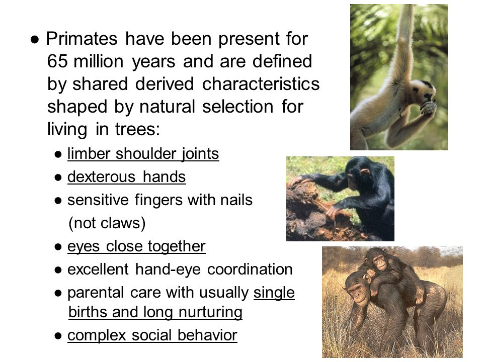 Natural Selection And Parental Care