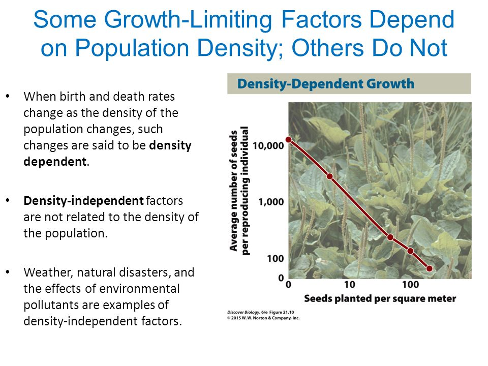 Density Independent Limiting Factors Examples