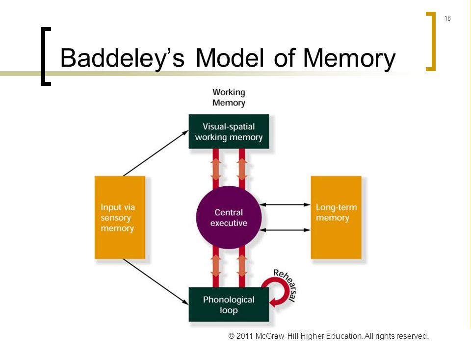 working memory model doc While a number of partial models of working memory exist, they do not yet embrace all the phenomena related to it in a computational framework do.