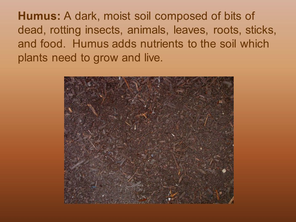 All about soil all about soil 4 7a ppt download for Soil is composed of