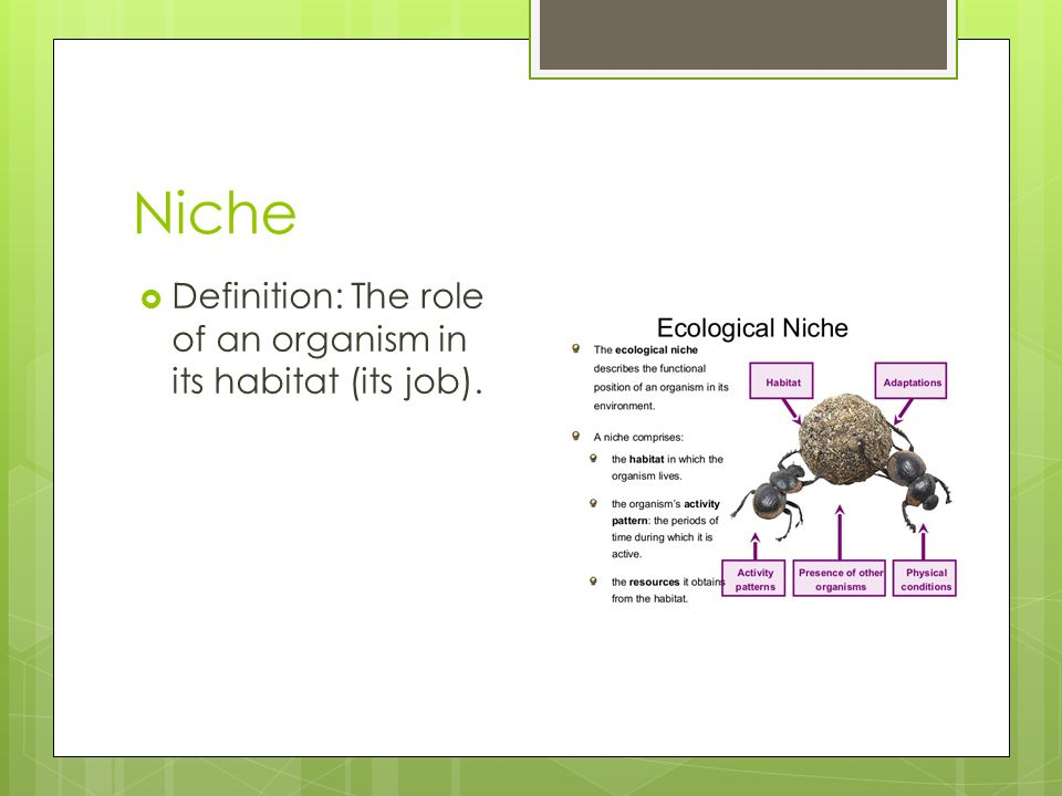 Science Ecology Review Terms - ppt video online download