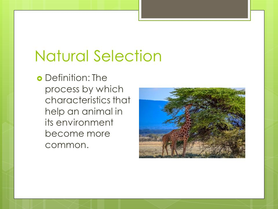 The Definition Of Natural Selection In Science