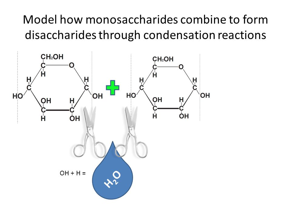 condensation reactions form disaccharides and polysaccharides These simple sugars are known as monosaccharides the molecular  they can  combine with others to form bigger molecules  this diagram shows two  molecules of β glucose forming a disaccharide  a condensation reaction  means that as two carbohydrate molecules bond together a water molecule is  produced.