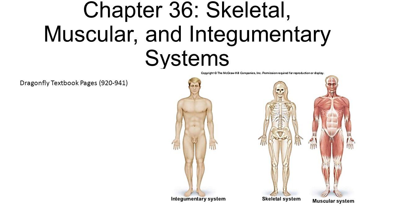 Ziemlich Integumentary Systemstrukturen Zeitgenössisch - Menschliche ...