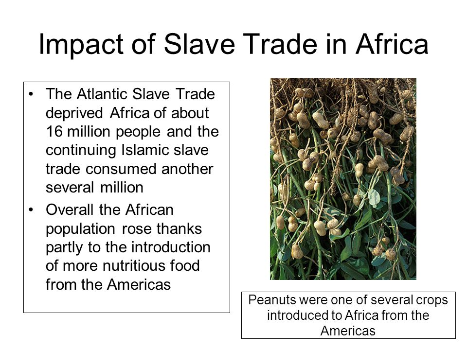 Atlantic slave trade theme slavery as a product of for African crops and slave cuisine