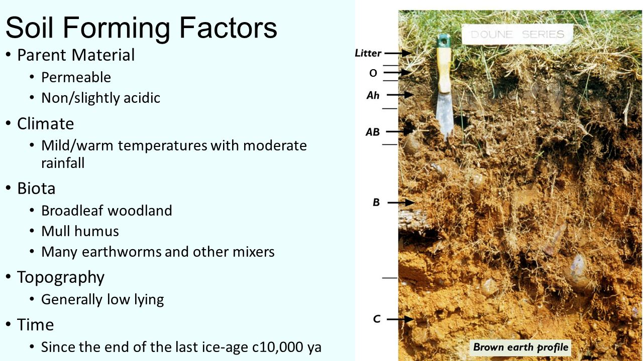 What is soil soil is a combination of four main for Soil forming factors