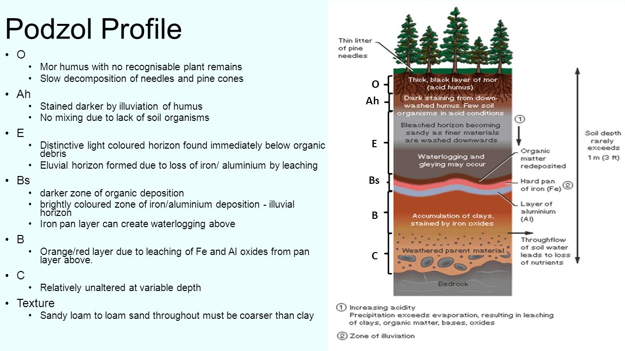 What is soil soil is a combination of four main components ppt podzol profile o ah o e ah bs e b c texture bs b c pooptronica Images