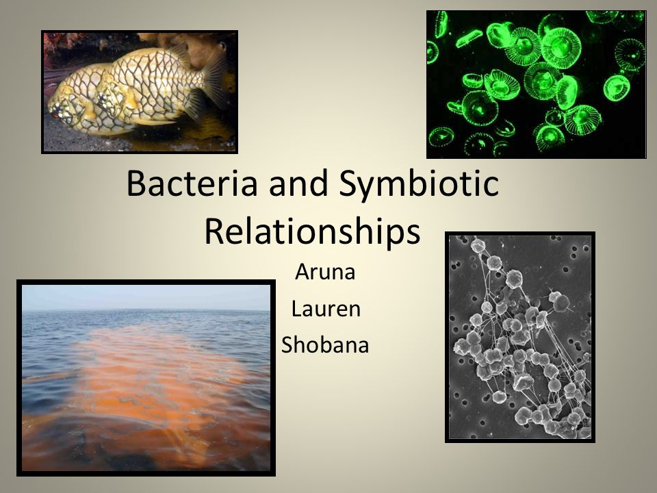 chemosynthetic bacteria and tubeworms relationship quotes