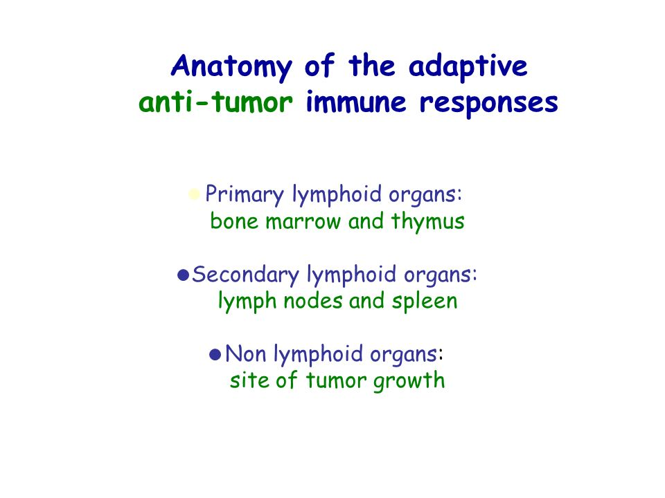 Anatomy of the adaptive anti-tumor immune responses