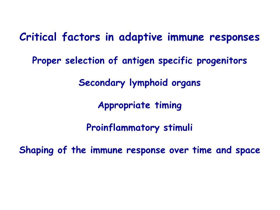 Critical factors in adaptive immune responses