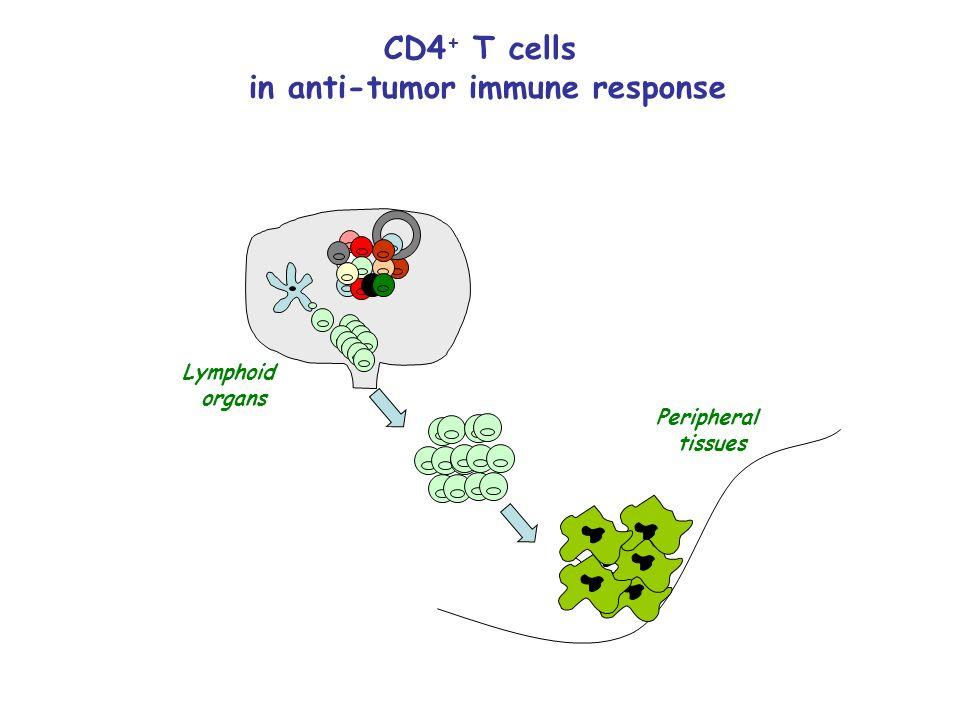 in anti-tumor immune response