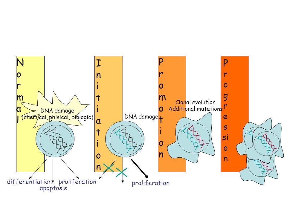 Pathogenesis of neoplasia