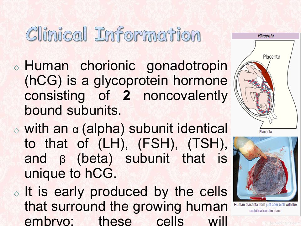 the function of human chorionic gonadotropin hcg in the human body Human chorionic gonadotropin (hcg) is a hormone produced in women during pregnancy hcg intended for therapeutic uses or to affect the structure or function of the.