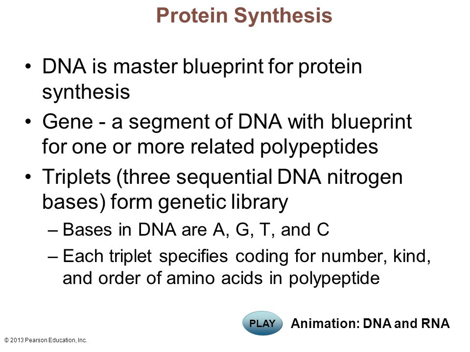 Marieb chapter 3 part d cells the living units ppt download 26 dna is master blueprint for protein synthesis malvernweather Choice Image