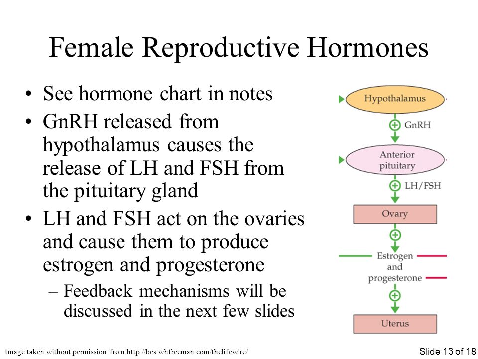 evaluation of progesterone and estrogen biology essay Learn how ovarian disorders can be diagnosed and tests for evaluating ovarian   month (ovulation) and they deliver the hormones estrogen and progesterone,.