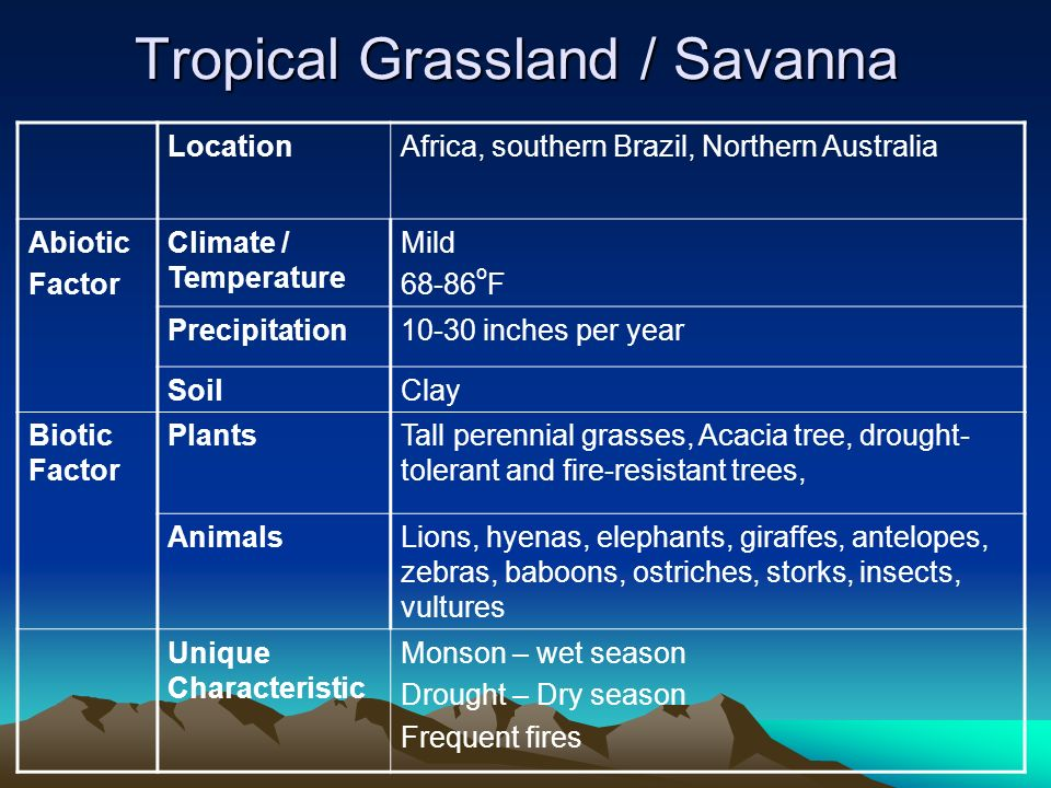 tropical grassland special features Location tropical grasslands are located near the equator, between the tropic of cancer and the tropic of capricorn they cover much of africa as well as large areas of australia, south america, and india.