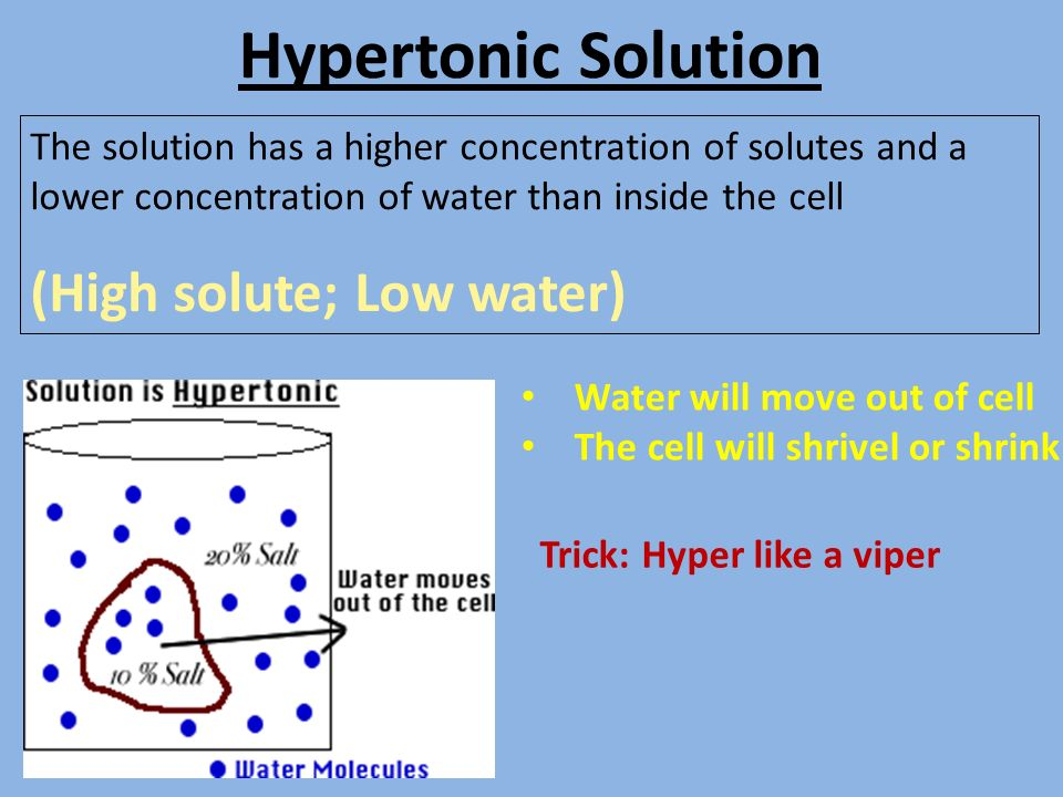 transport of solute in solvent through Membrane transport diffusion, osmosis, and tonicity can readily pass through the lipid bilayer of cell inversely related to solute concentration.