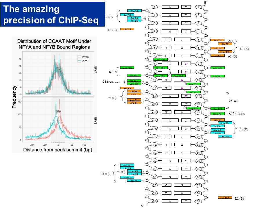 The amazing precision of ChIP-Seq