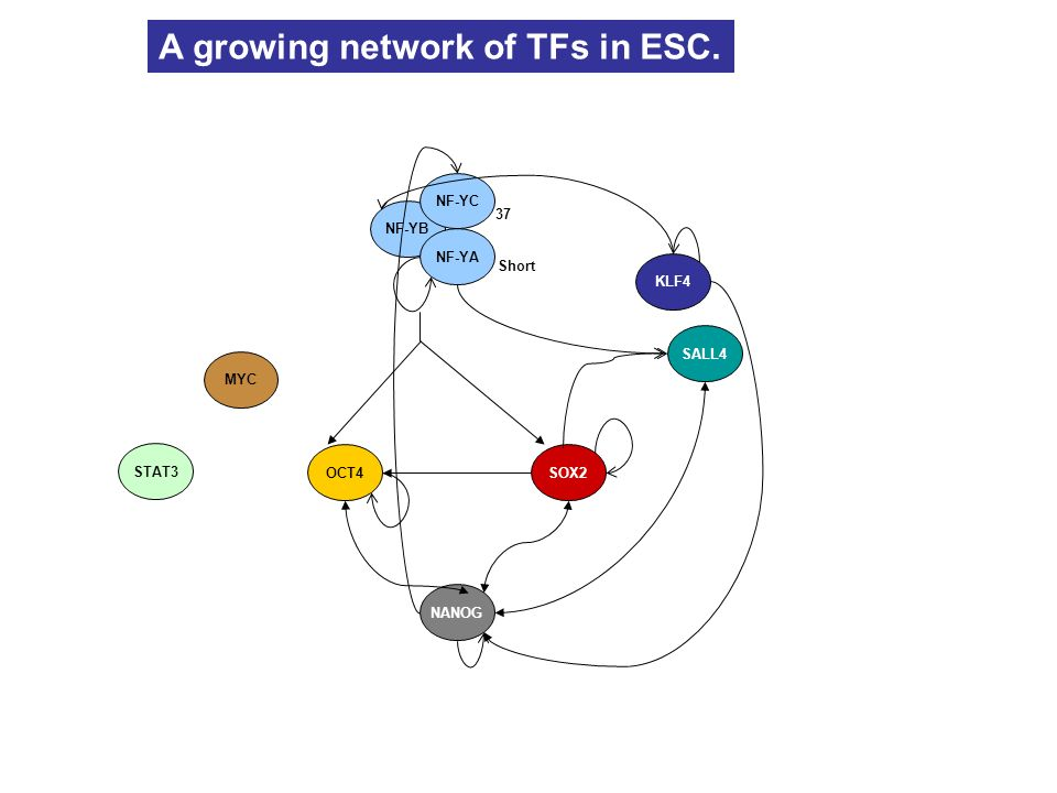 A growing network of TFs in ESC.