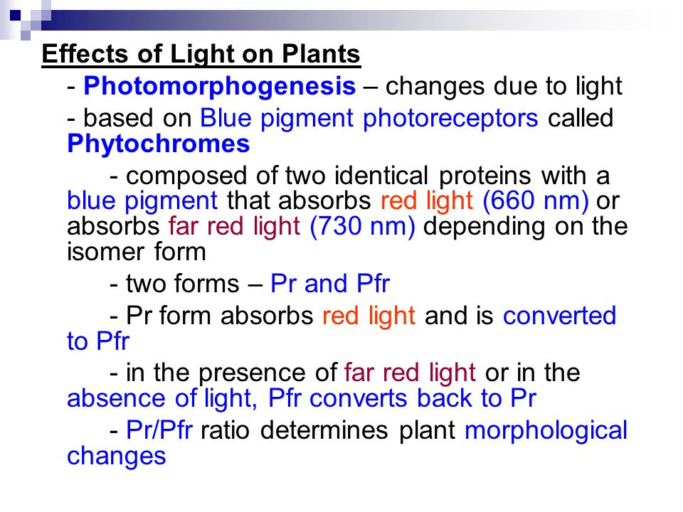 the effects of light on plants Light pollution harms plants in the environment  i was initially under the assumption that light pollution's effect on the trees and plants would not be much of a .