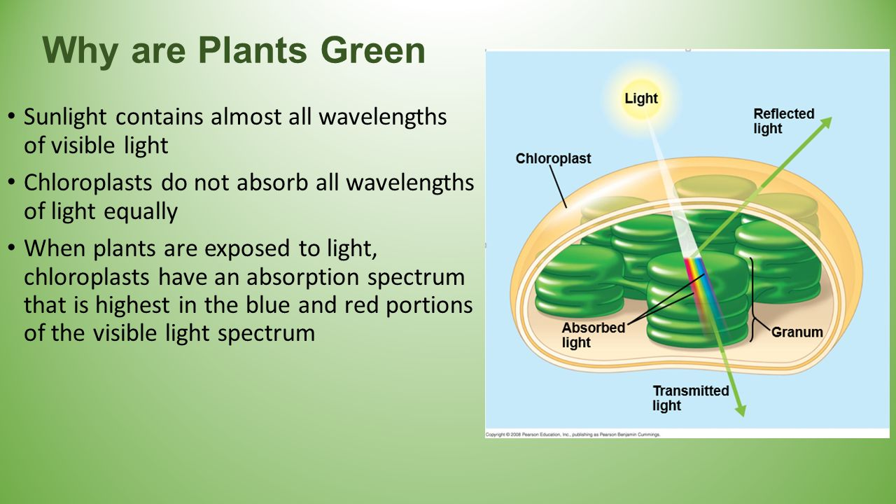 what is anabolic process in photosynthesis