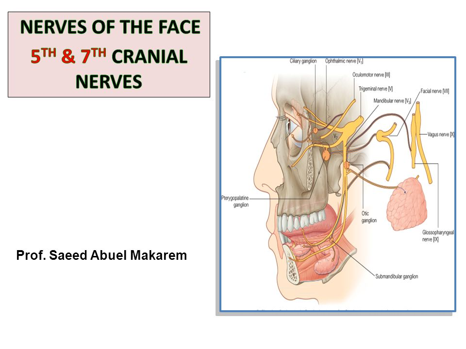 NERVES OF THE FACE 5TH & 7TH CRANIAL NERVES - ppt video online download