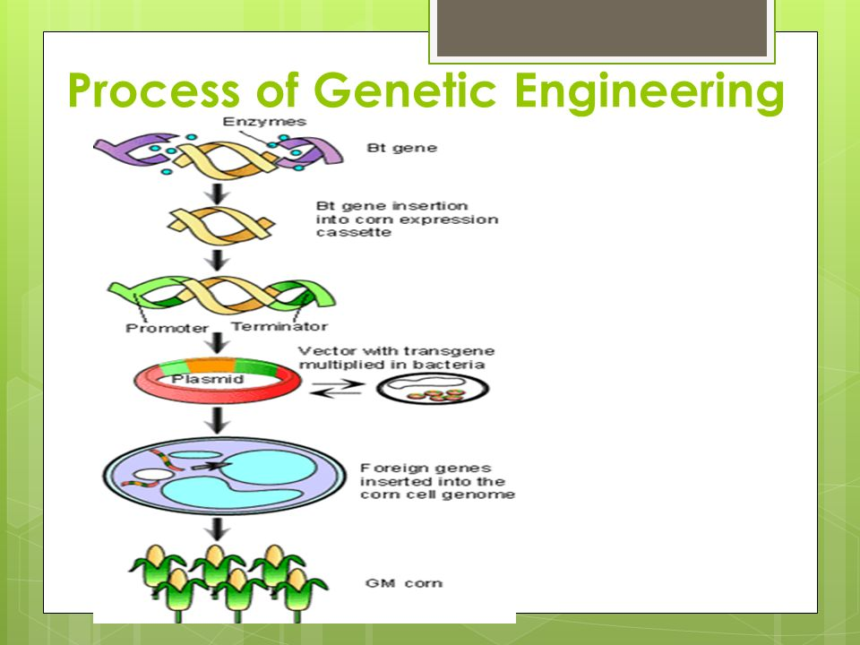 the process of genetic engineering Discover the many important advantages and disadvantages of genetic engineering.