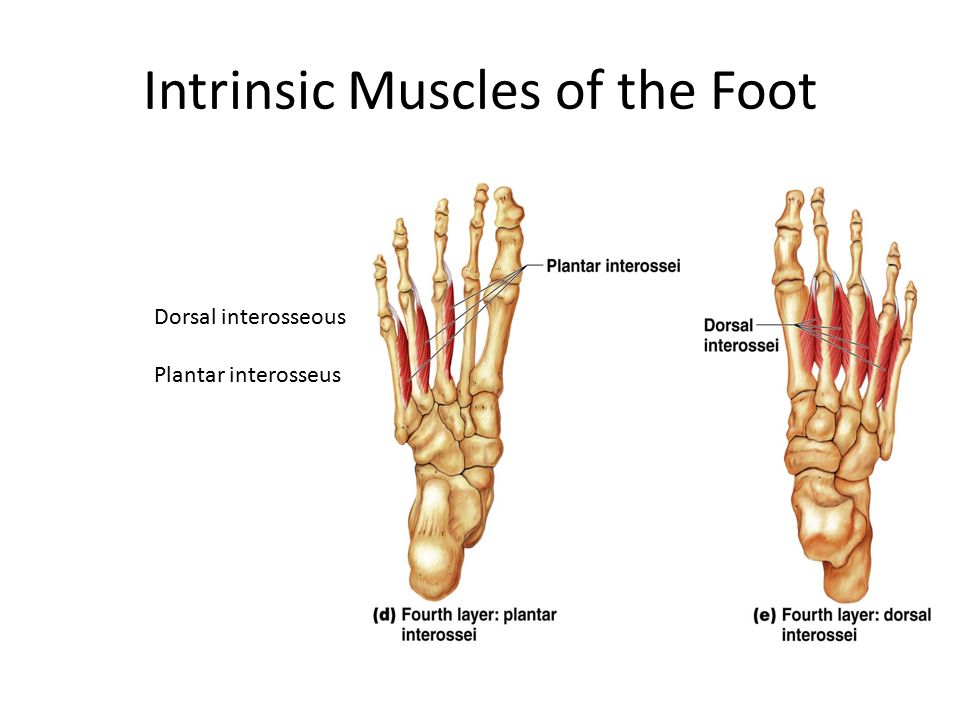 intrinsic foot muscle exercises pdf