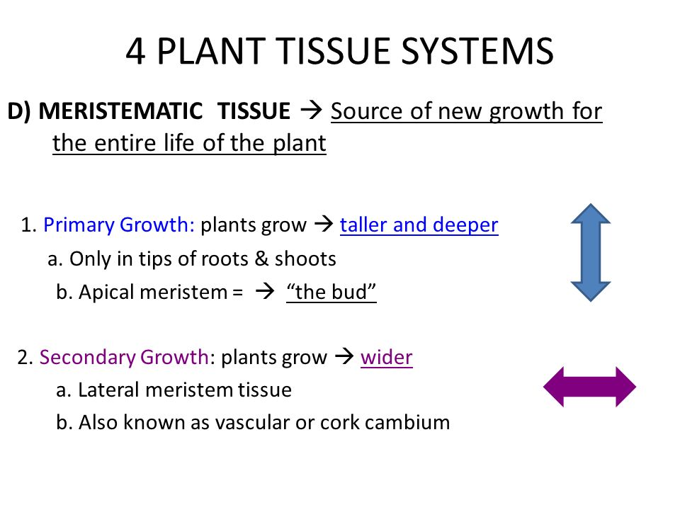 What Plant Parts Do You Eat Ppt Download