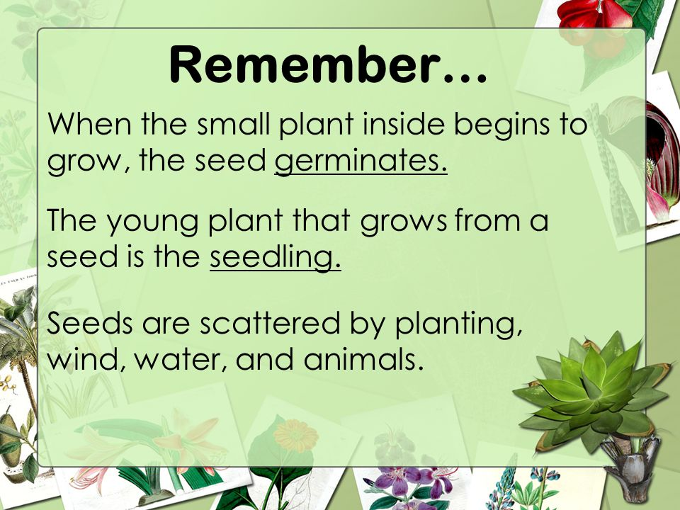 Parts of a plant ppt video online download Small plants to grow inside