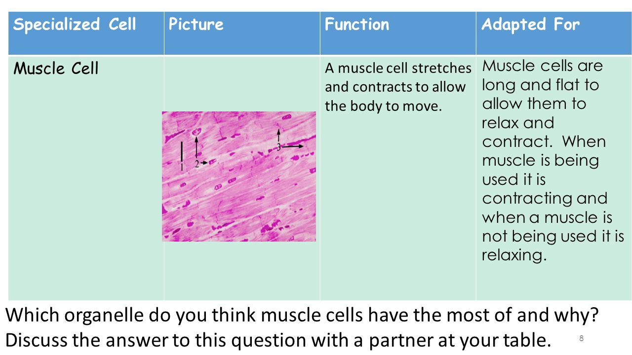 Warm-up 2/25/16 Work on completing your cell analogy ...