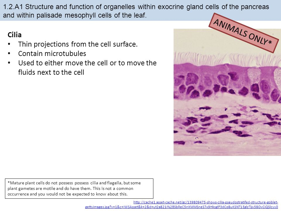 1.2 Ultrastructure of cells - ppt download