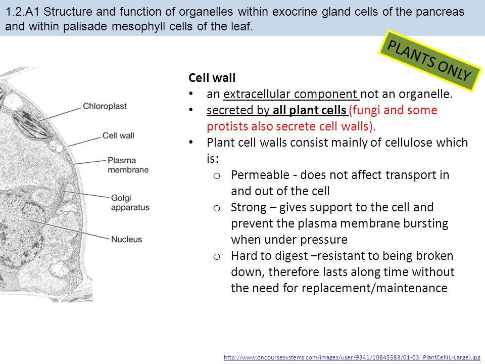 12 ultrastructure of cells ppt download 43 plants only cell ccuart Images