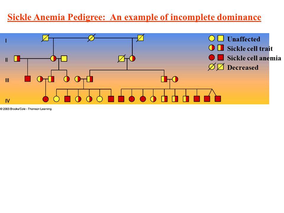 Mendelian Genetics & Inheritance Lecture Notes Biol 100 ...