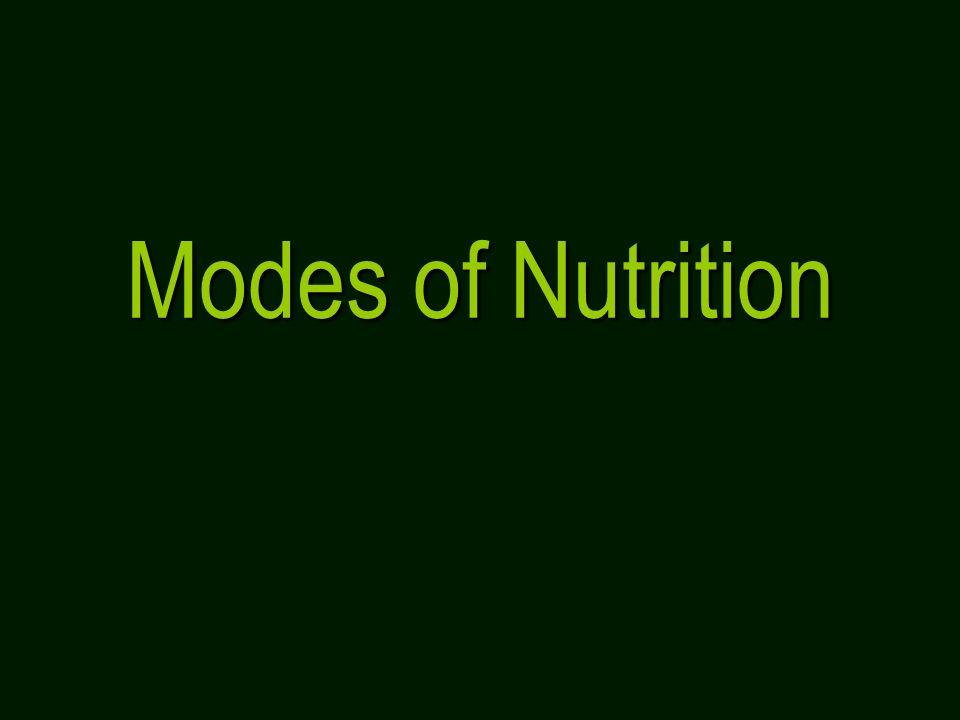 Modes of Nutrition. - ppt video online download | 960 x 720 jpeg 22kB